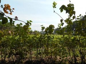 DSCN1852_silkfarmen