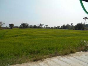 DSCN2330_landsbygden